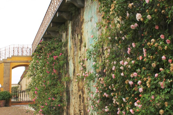 Climbing roses cover the wall between the upper two terraces.