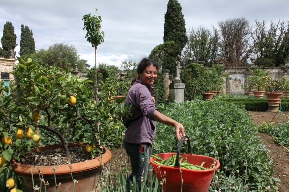 She offers us some of the fava beans she has just picked.   We munch on them as we make our way to the exit.