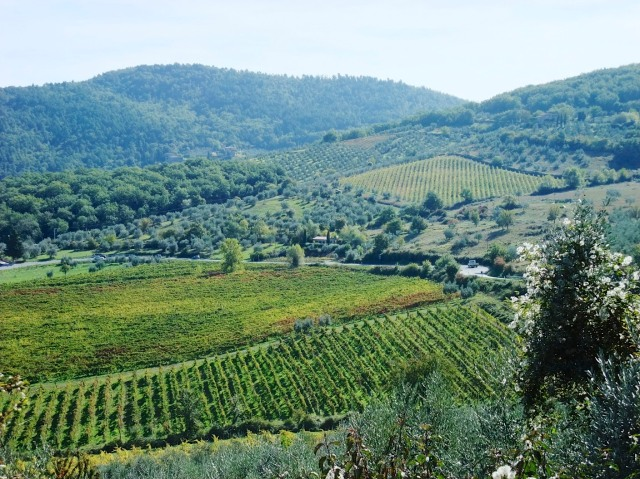 Vineyards and olive groves near Panzano.