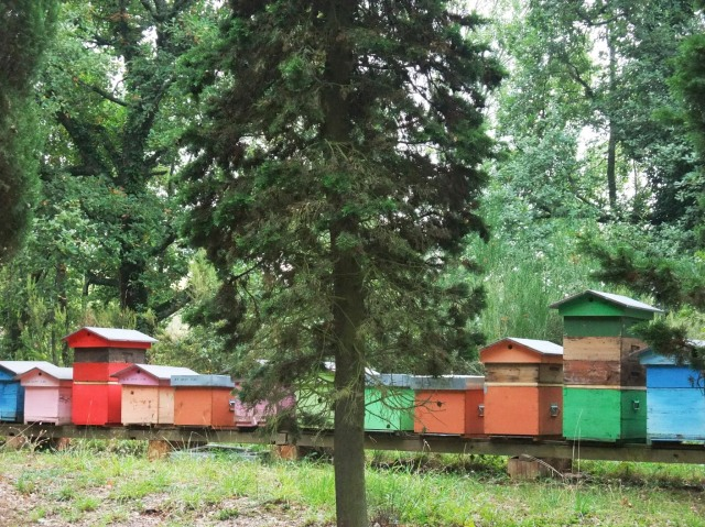 Brightly painted beehives.  Fantasia or Scienza?