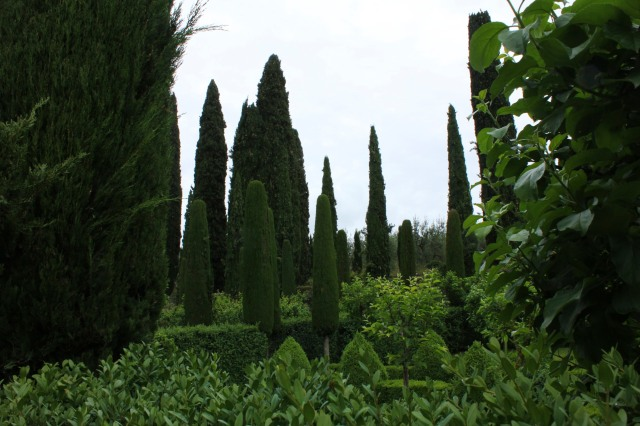 Cypresses, clipped boxwood in a monochrome palette of green.