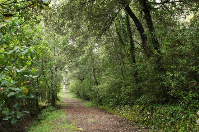 Beyond, an essential element of important gardens of the era, is the bosco (forest).