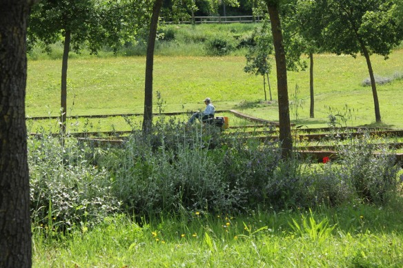 Sheppard mowing the meadow.