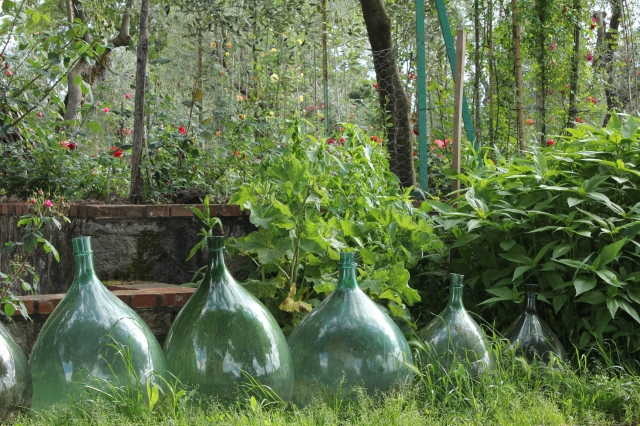 Damigiani at the entrance to Roseto Fineschi. Only in Italy would you find a display of oversized wine jugs at the entrance to a garden.