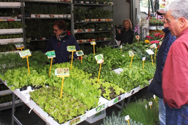 Pondering lettuces for the winter orto (vegetable garden)