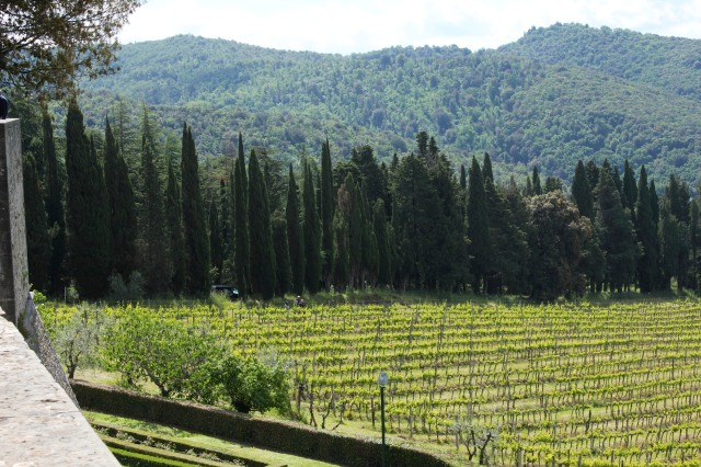To my left I noticed people in the vineyards.  Time for me to set out for the path the guide had told me about.
