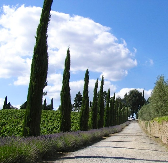 The strada bianca that leads to the Dievole vineyard.