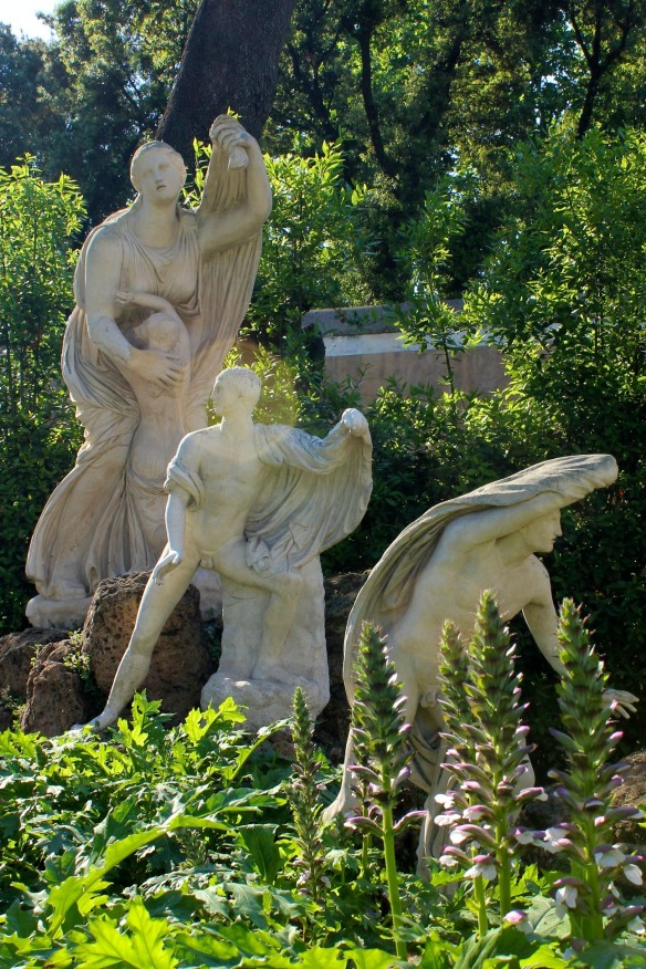 I saw Acanthus, so difficult to grow in Canada, flourishing like a weed everywhere in Rome.