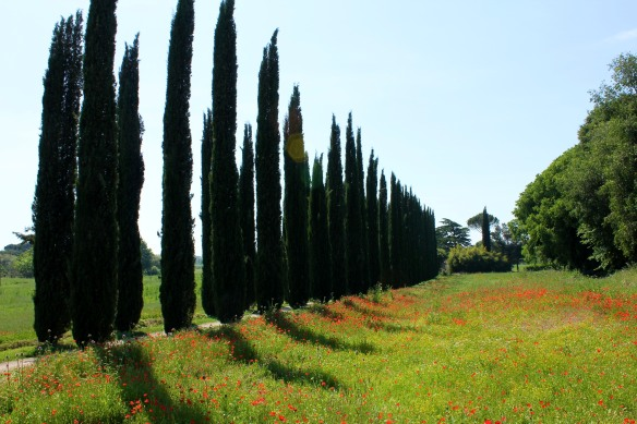 Poppies and cypresses along the country lane to the villa entrance.