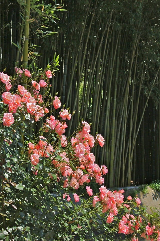 Bamboo, the artistocrat's fence.