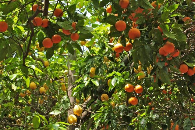 Citrus Heaven