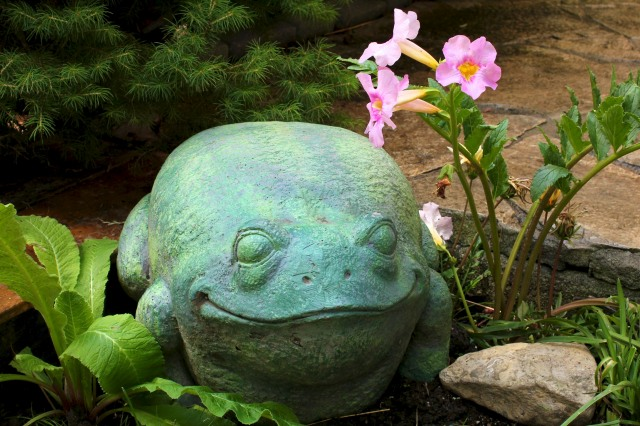 This whimsical frog  - next to a gorgeous - and horticulturally-speaking - very serious Incarvillea (Hardy Gloxinia) was in one of the gardens on the 2012 Leaside Garden Club tour in Toronto.