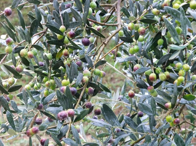 …and so are the olives.