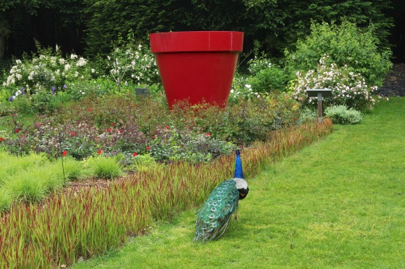 After sauntering through the vegetable patch it set out along the Fairies' Path.  Towards the giant red pot.