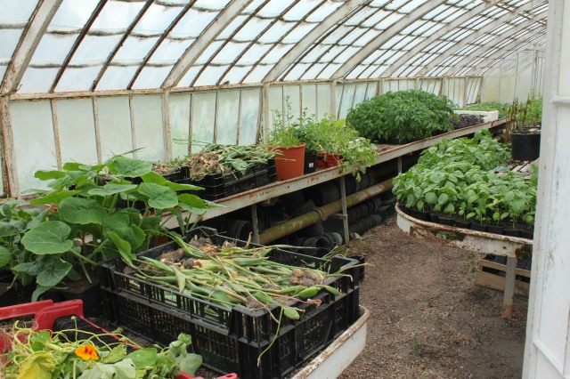 It's always fun to have a peek at the greenhouse.