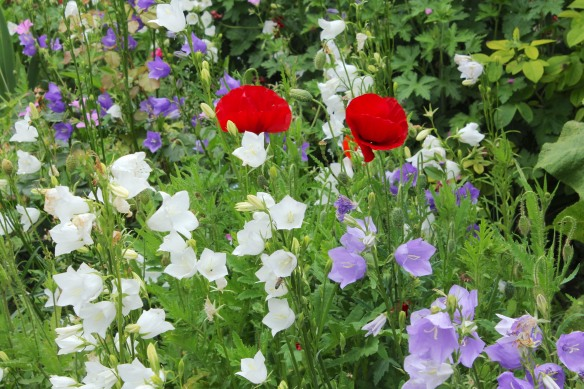 In the Garden of Senses next to the greenhouse, they had had more luck with the Tricolore.