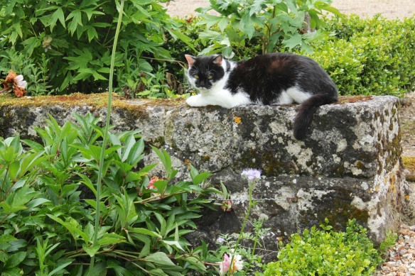 And on top of the wall, a descendant of the chaton the castle was named for?