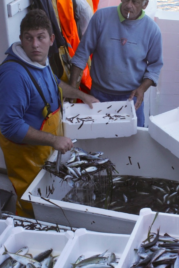 After the tuna, the fishermen started sorting and cleaning the smaller fish.