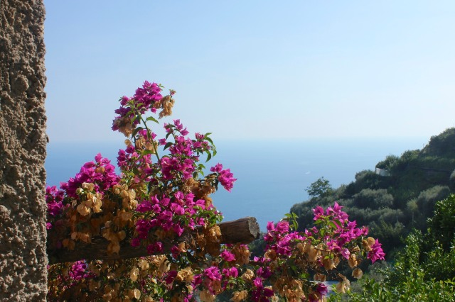 Or bougainvillea, apparently growing wild.