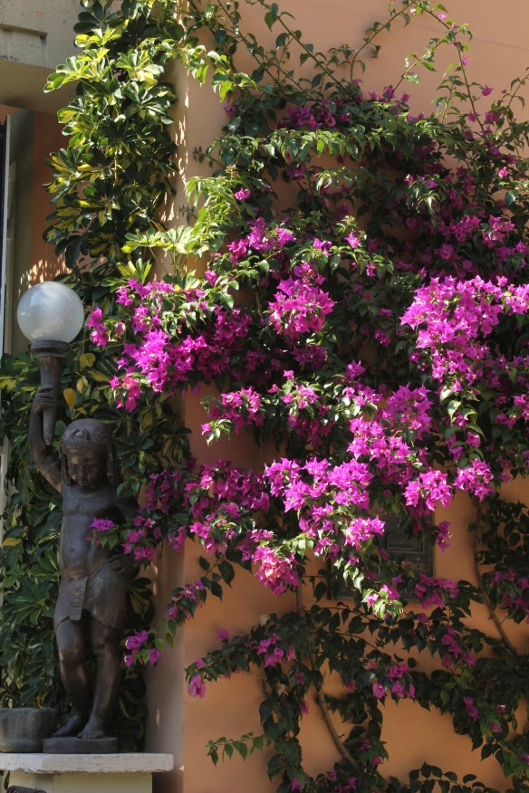 Bougainvillea at the entrance to ...sets the tone.