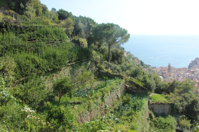 The eastern terraces of Villa Maria.  The path to Maiori begins on the other side of the mountain.