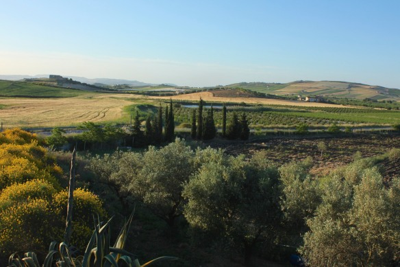 Early morning view from the agriturismo.