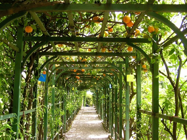 The 'Citrus Allee', full of the exotic fruits being brought back from newly discovered corners of the world.